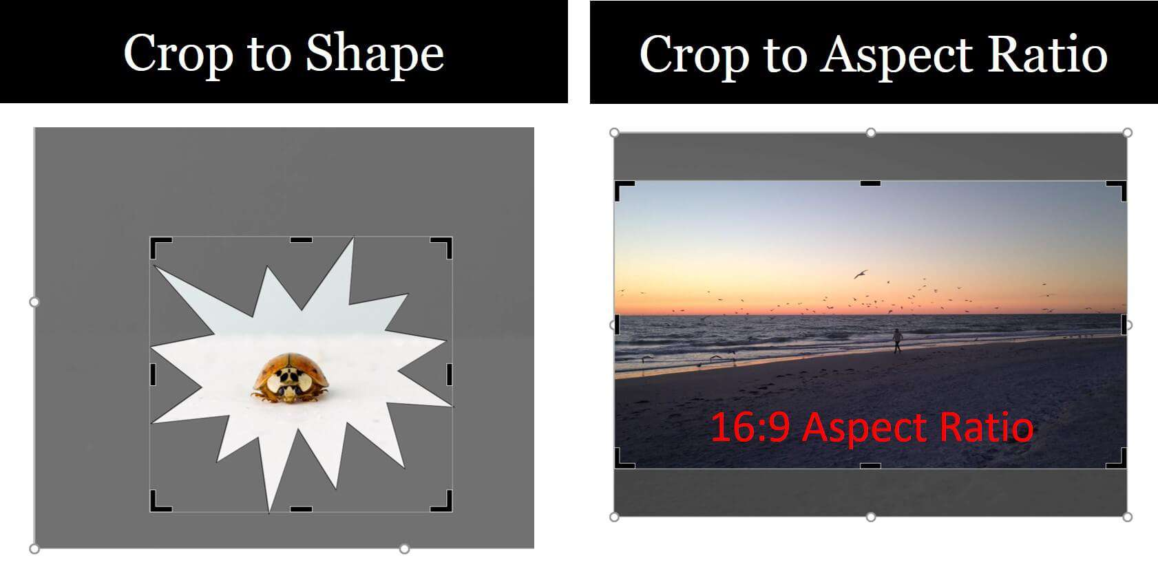 how to crop a picture in powerpoint nuts bolts speed training