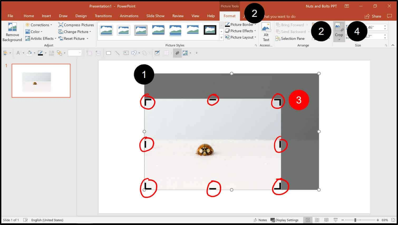 To crop an image in PowerPoint, from the Picture tools format tab click the Crop command