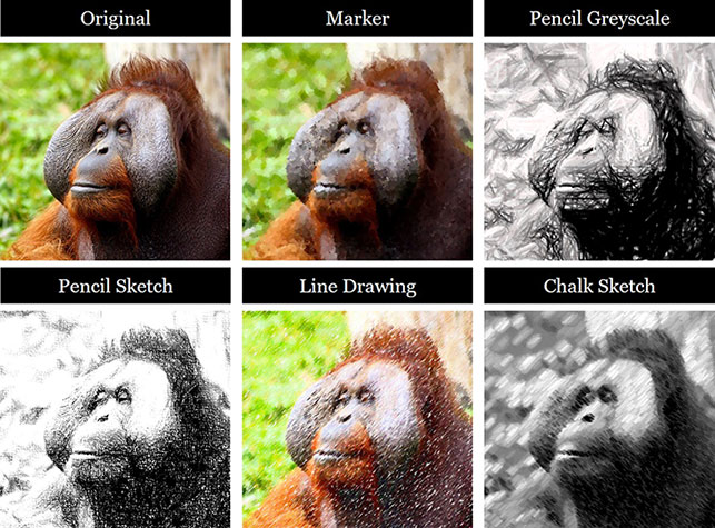 The 5 different photo to sketch effect options you have in PowerPoint. Marker, pencil greyscale, pencial sketch, line drawing and chalk sketch