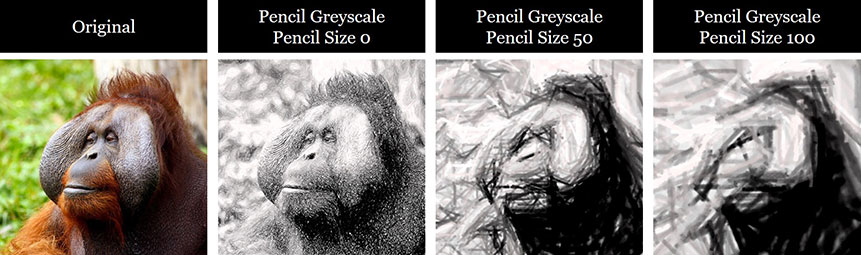 Example of a photo turned into a black and white drawing with different pencil size effects applied to it in PowerPoint